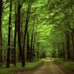 Не лесам адзіным