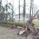 В понедельник, 13 апреля, на Глусский район обрушился настоящий ураган, порывы ветра достигали 15 — 18 метров в секунду