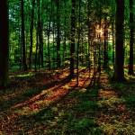 Лес рубят…
