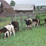 На сельском подворье