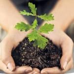 Посади свое дерево