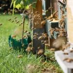 Пчелы выйдут на работу