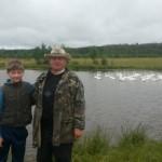 Белые лебеди на пруду