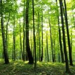 Неделя леса