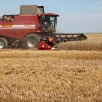 Жатва-2017. Лидеры в своих хозяйствах на уборке зерновых