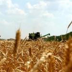 Лидеры в своих хозяйствах на уборке зерновых
