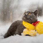 Температурные перепады ожидаются в начале следующей недели в Могилёвской области